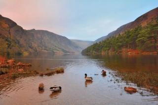 Ducks on Glendalough Lake