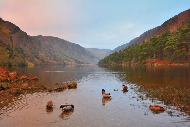 Ducks on Glendalough Lake